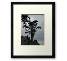 windswept 2 Framed Print