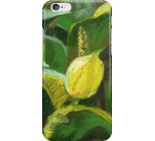 Skunk cabbage in blossom. Soft pastel painting. iPhone Case/Skin