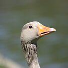 goose by wendywoo1972