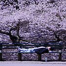 Resting in Central Park. by Lesley  Hill