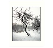 Garden in winter Art Print