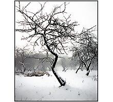 Garden in winter Photographic Print