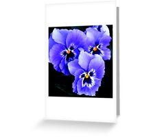 Blue Pansies in Lyme town gardens ,Dorset UK Greeting Card