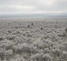Sagebrush Sea , Oregon , United States of America   by Christopher Barton