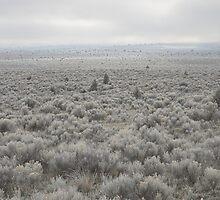 Sagebrush Sea , Oregon , United States of America   by Christopher Barton