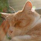 Yes I am enjoying my sunny nap... by Trish Peach