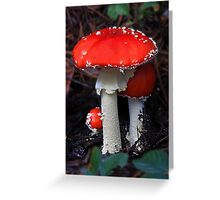 Big Red Fly Agaric Greeting Card