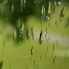 Little worlds clinging to glass in green rain by Nadia Korths