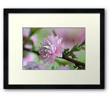 Precious Pink Framed Print