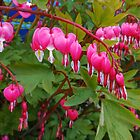 Pretty-in-Pink - Little Bleeding Hearts by kathrynsgallery