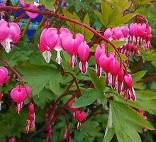 Pretty-in-Pink - Little Bleeding Hearts by kathrynsgallery