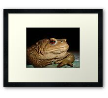 Swimming in the Bufo  Framed Print