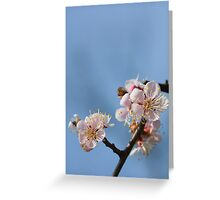 Photo of  blossoming  Ume tree Greeting Card