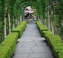 An Elegant Arched Walkway in Butchart Gardens by Carol Clifford