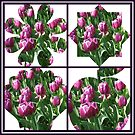 Just For Fun - Keukenhof Tulips Collage by MidnightMelody