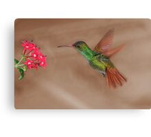Rufous-tailed hummingbird in flight Canvas Print