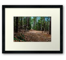 Path In The Woods Framed Print