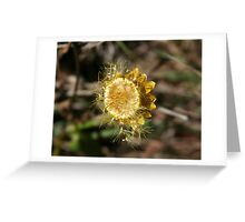 Golden Seeds Greeting Card