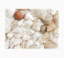 colorful seashells by sf2301420max