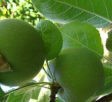 Gordon Apples by Linda Scott