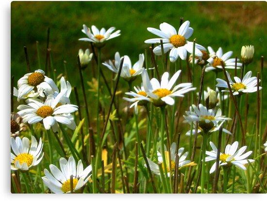 Sunny Daisy by ienemien
