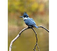 Belted Kingfisher Scouting Dinner Photographic Print