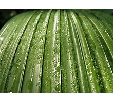 Green Dew Photographic Print