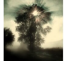 Otane Fog Photographic Print