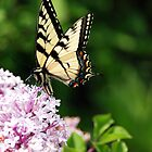 Happiness is a butterfly, which when pursued, is always just beyond your grasp, but which, if you will sit down quietly, may alight upon you-Nathaniel Hawthorne by photographyjen