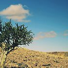 Acacia Tree, Namibia by MacLeod