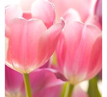 Tulips_9 Photographic Print