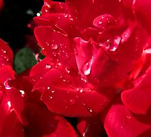 RED AND RAINDROPS by Sandra  Aguirre