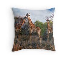 3 Giraffes in Swaziland, Africa Throw Pillow