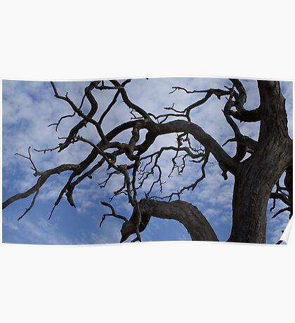 Strong limbs - cotton ball sky Poster