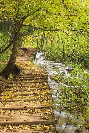 autumn leaves on steps , Plitvice Lakes, Croatia  by Christopher Barton