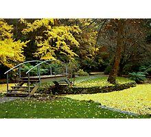 Alfred Nicholas Gardens-Autumn Photographic Print