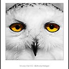 Snowy Owl SC by Anthony Hedger by Birds of Prey (Group Profile)