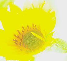 yellow by Muhammad Tariq Mahmood Ahmad