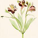 Alstroemeria  by Rene Hales