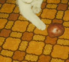 Vintage Potato Cat Sticker