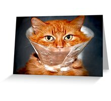 His Majesty King Pumpkin Not Happy Greeting Card