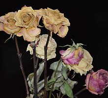 ROSES FROM THE PAST. by JurmaleP