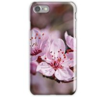 pink cherry blossom spring  iPhone Case/Skin