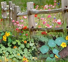 Nasturtium fields by Maree  Clarkson
