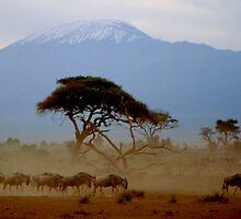 Kilimanjaro by Nancy Barrett
