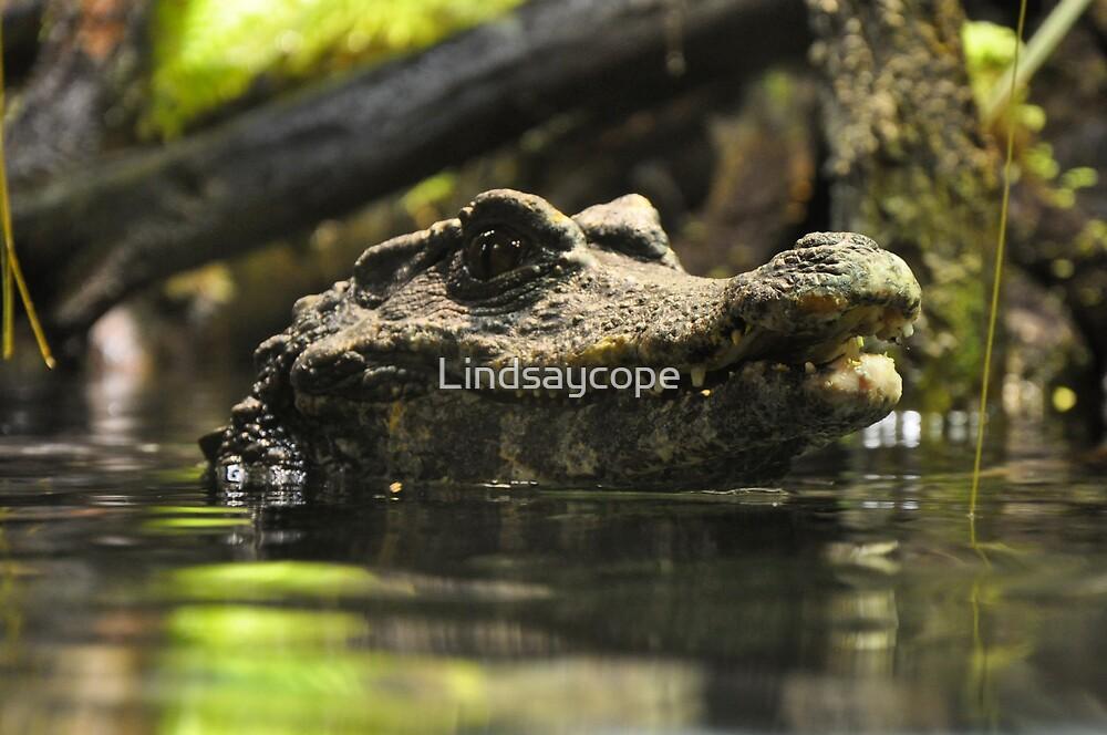 Gator by Lindsaycope