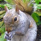 Nutty Squirrel by Honor Kyne