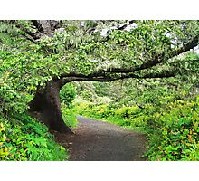 THE WALKING STICK....Heceta Lighthouse Path. Oregon Coast Photographic Print