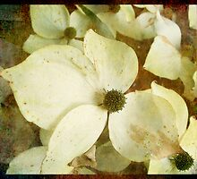 Yellow Dogwood by Angelafaye
