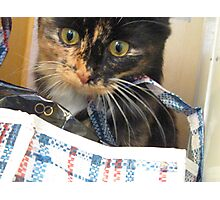 Cat Out of the Bag Photographic Print